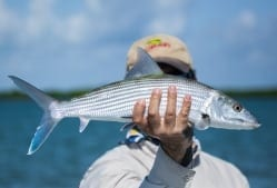 A bonefish caugth while prefishing for the Del Brown, photo/guiding Captain Aaron Snell