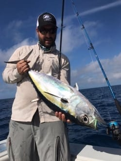 A blackfin tuna, caught on fly with Chris Trosset. Photo/guiding Chris Trosset