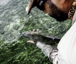 A bonefish release from the 2014 Superfly. Photo/guiding Captain Aaron Snell