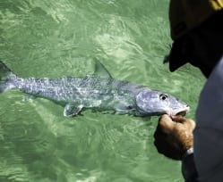 More from the bonefish in the Superfly. Aaron Snell photo
